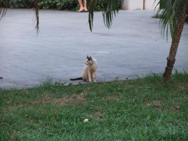 台北中山堂的野貓