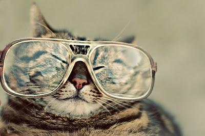 CatWithGlasses-2.jpg