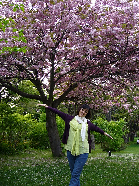 支笏湖畔-僅剩幾棵未謝的櫻花樹