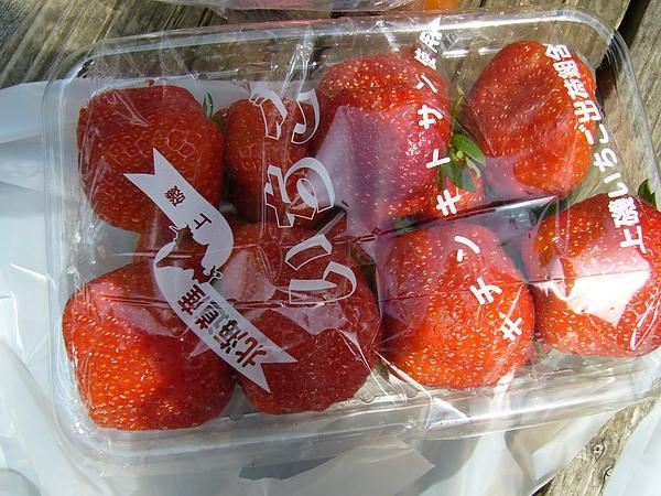 我最愛的草莓,又大又甜又好吃!!