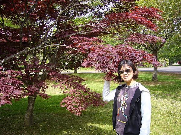 某公園的楓樹