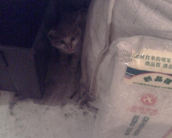 躲在架子底下的茜茜