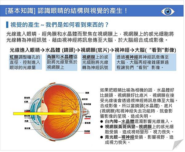 [基本知識] 認識眼睛的結構與視覺的產生!.jpg