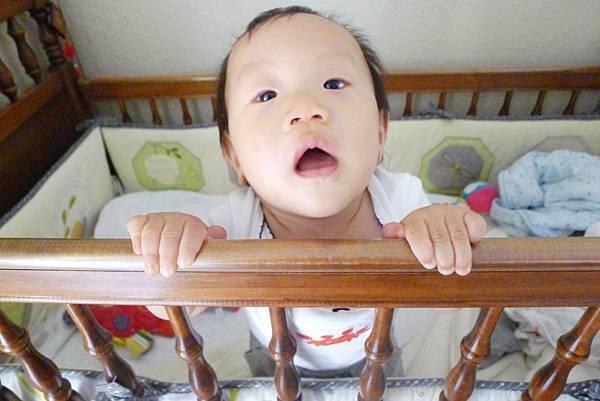 喵小兔8個月