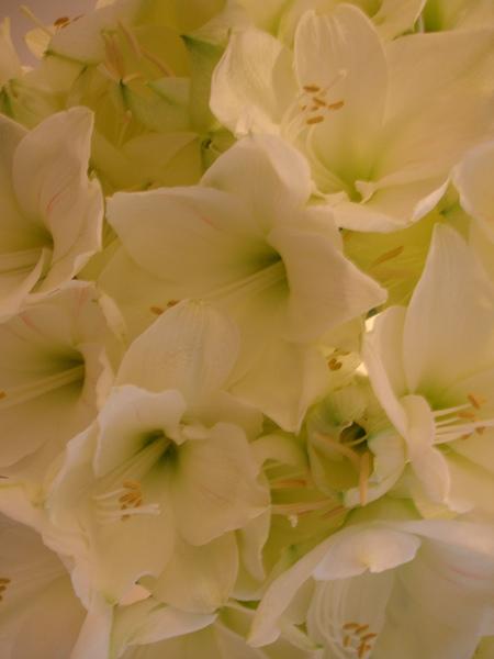 Lady M 店內的花束