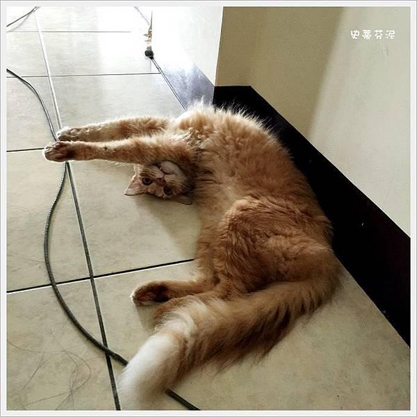 貓咪洗牙 002.jpg