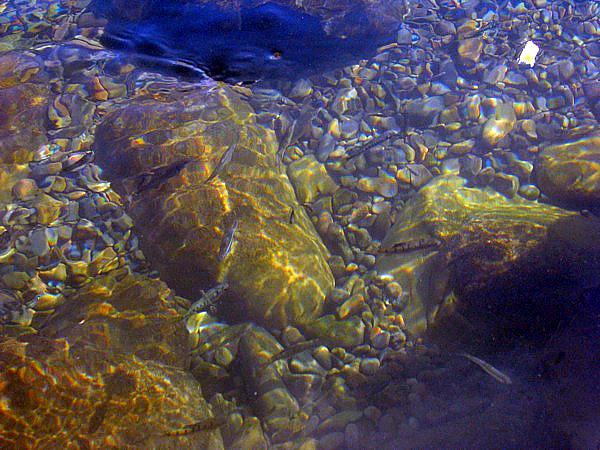 魚兒水中遊