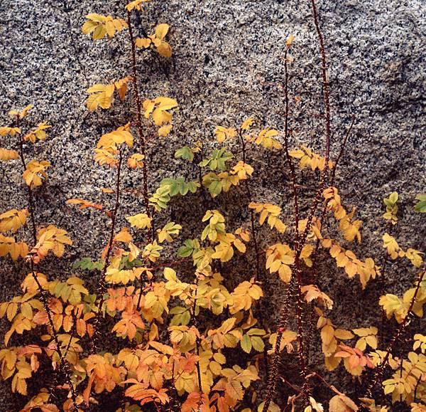 Autumn -1a.jpg
