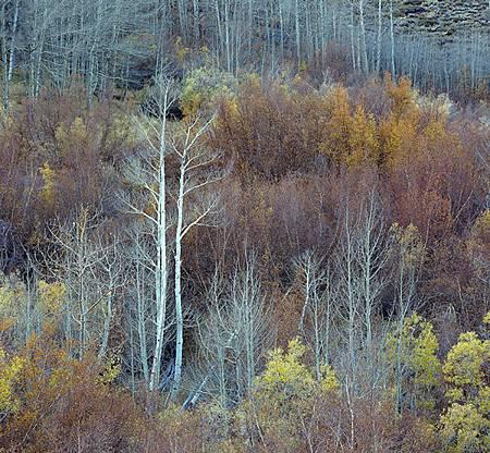Tree -5p45