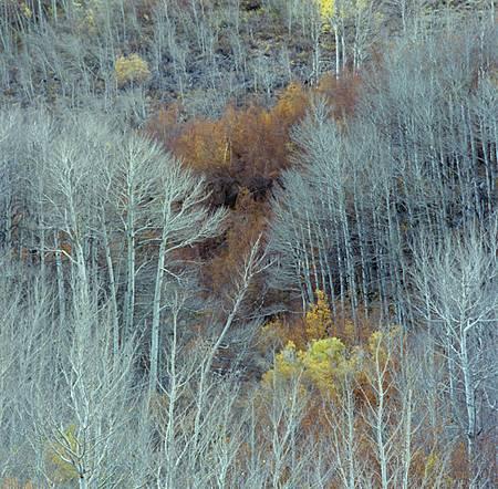 Tree -13p45