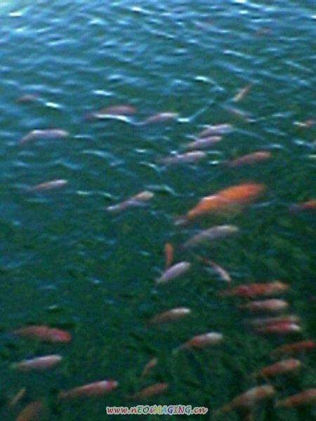 住在马中公园的鱼儿们