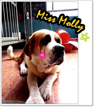 miss molly.JPG