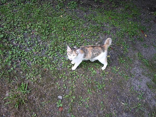 路邊照到的貓