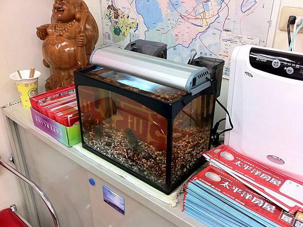 蝦太郎魚缸