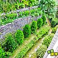 庭院大花園