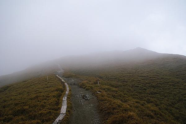 開始爬石門山,路超好走的,不愧是最簡單的百岳