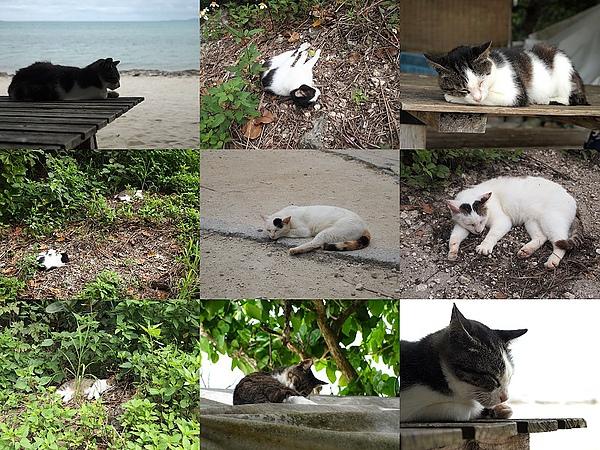33.竹富島的貓們都睡到翻掉,簡直過太爽.jpg