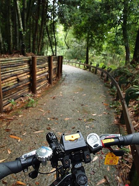 月潭自行車道綠色隧道