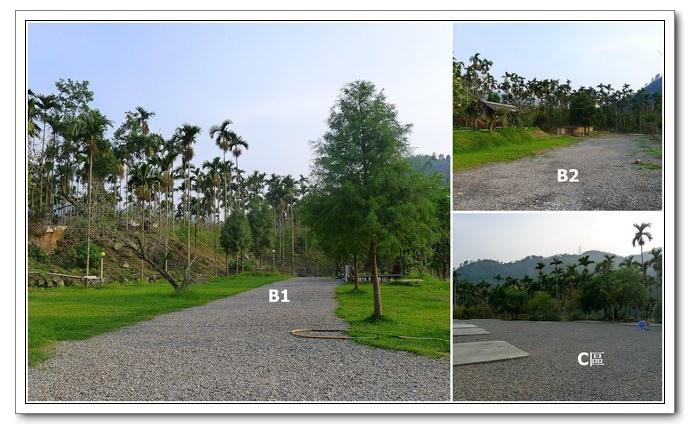 05-1020919黃金森林-002.jpg