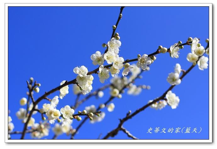 31-IMG_5648.jpg