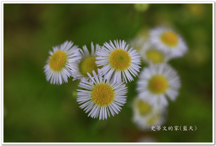 1-_MG_1486.jpg