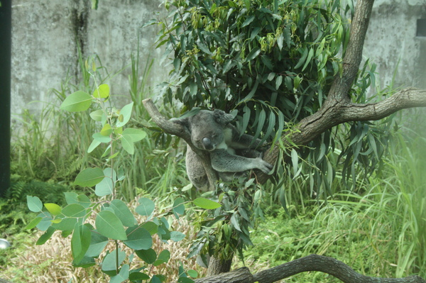 zoo 001.jpg