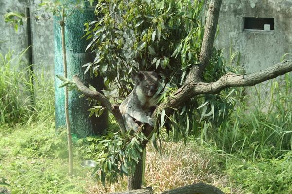zoo 003.jpg