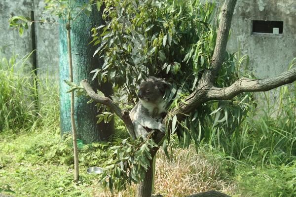 zoo 004.jpg