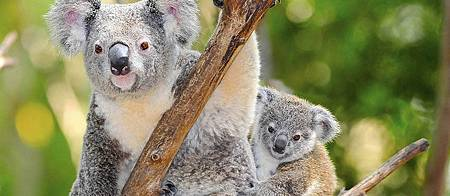 2016.11.8-11.13 澳洲墨爾本夢旅