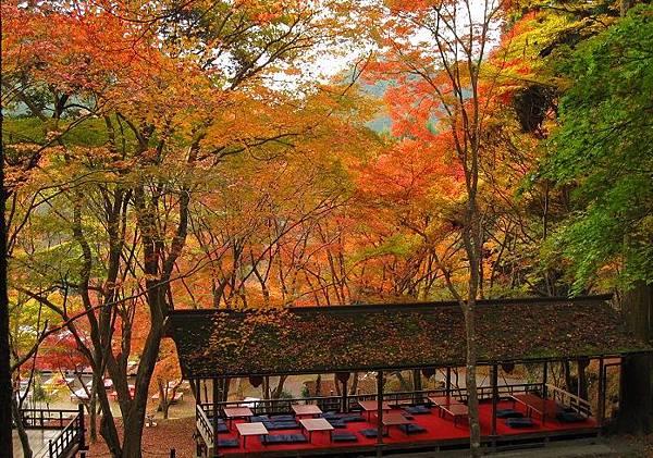 日本168楓紅