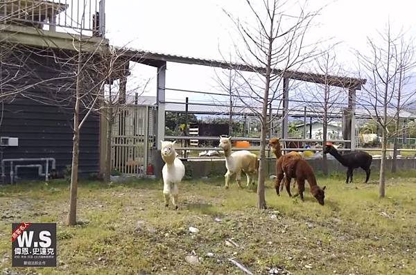 宜蘭休閒農場,草泥馬