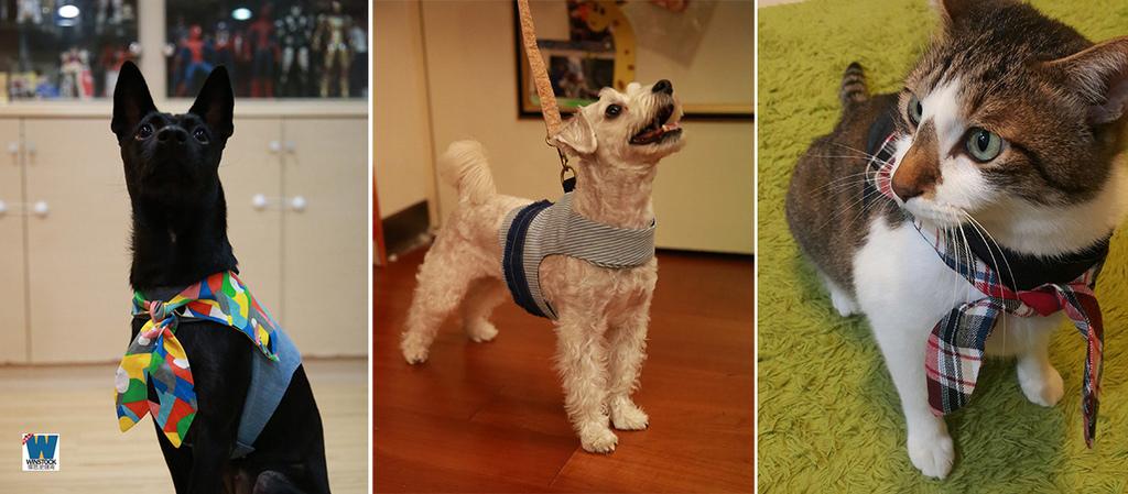 貓咪狗狗寵物胸背衣推薦品牌: Orange Blinks,一群以關懷毛小孩生活食衣住行的新銳設計 (寵物胸背帶,項圈,尺寸,怎麼用)