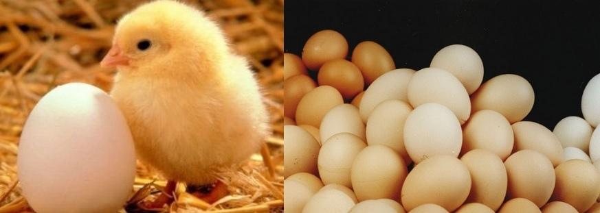 雞蛋理論教學,應用於判斷股市與基金指數多空趨勢: 科斯托蘭尼一個投機者的告白,投資股票多空循環如一顆雞蛋,量價分析波段操作