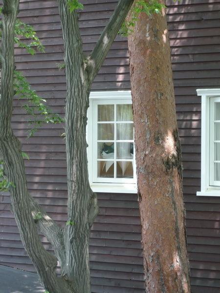 窗戶裡頭有躲東西