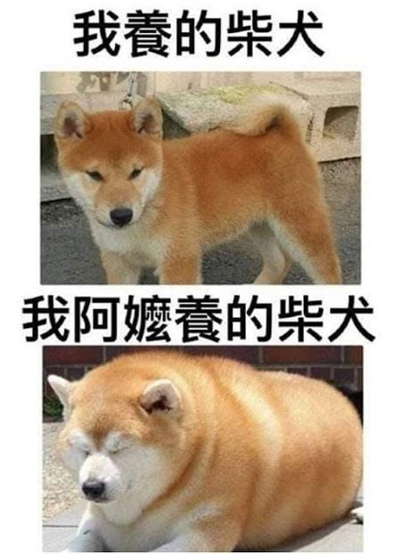 狗狗笑話.jpg