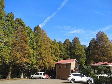 九芎湖落羽松2.jpg