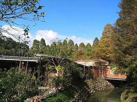九芎湖落羽松11.jpg