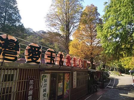 九芎湖落羽松6.jpg
