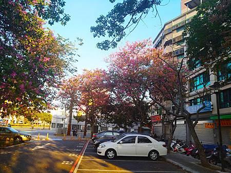 艷紫荊3.jpg