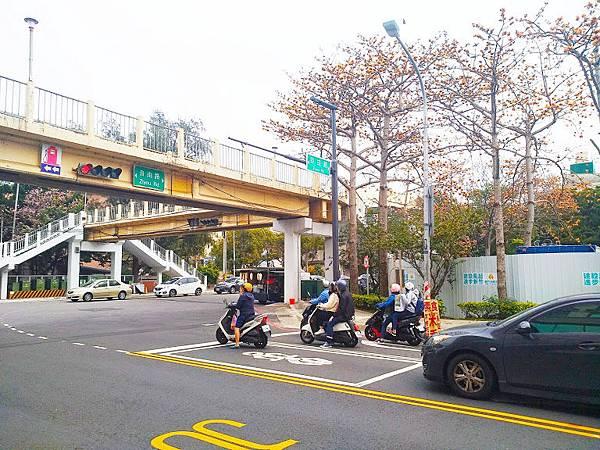 三民公園木棉花3.jpg