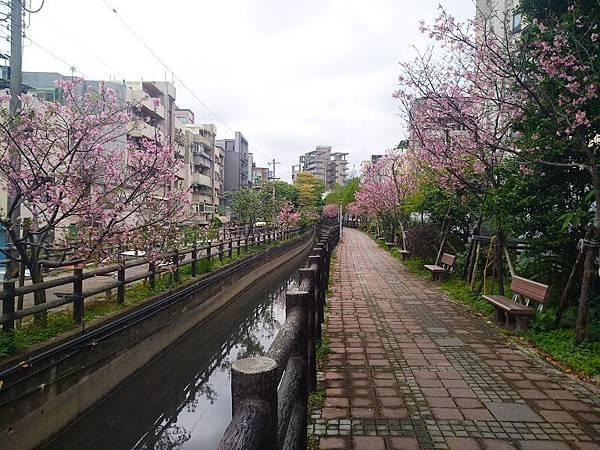 櫻花東南街11.jpg