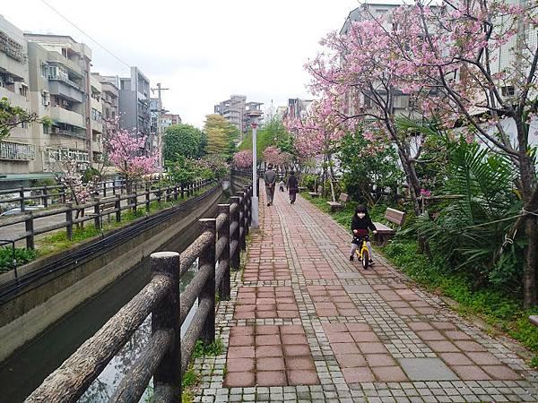 櫻花東南街10.jpg