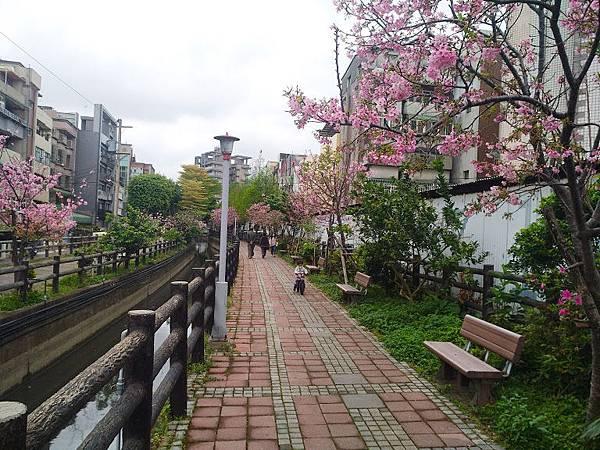 櫻花東南街9.jpg