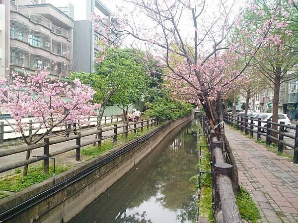 櫻花東南街8.jpg