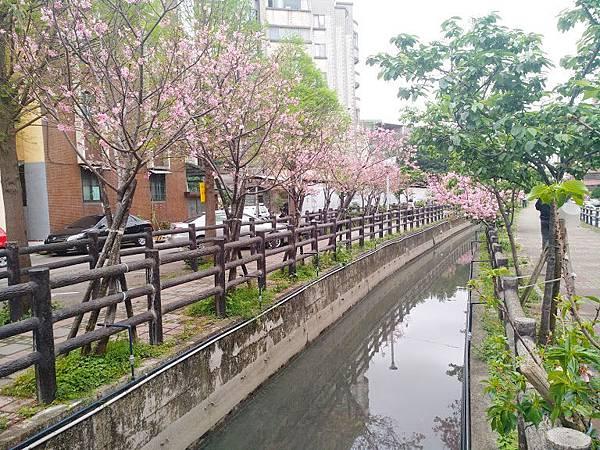 櫻花東南街7.jpg