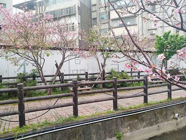 櫻花東南街6.jpg
