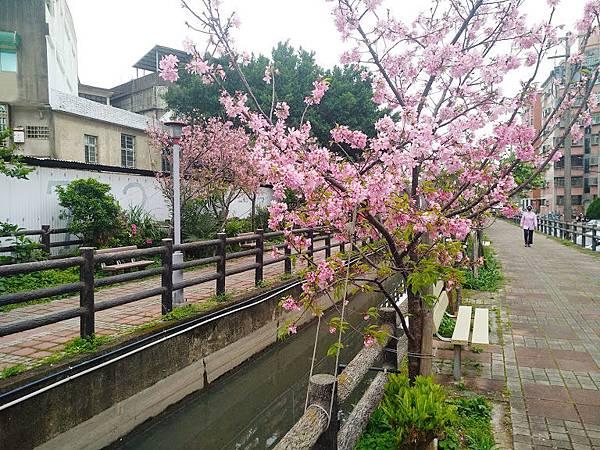 櫻花東南街5.jpg