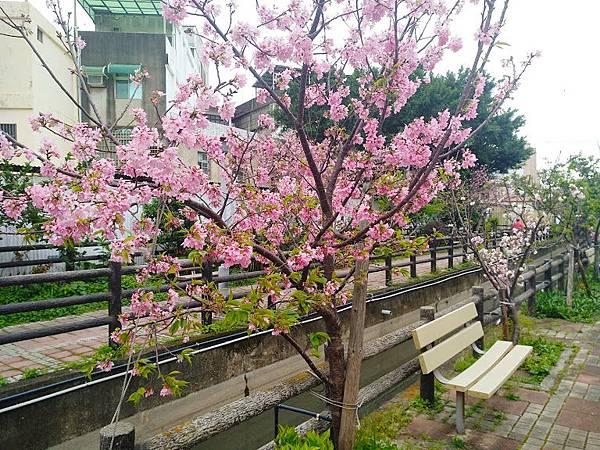 櫻花東南街4.jpg