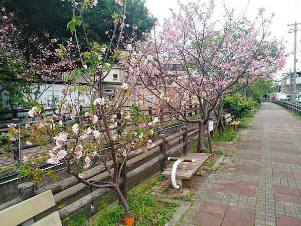 櫻花東南街3.jpg