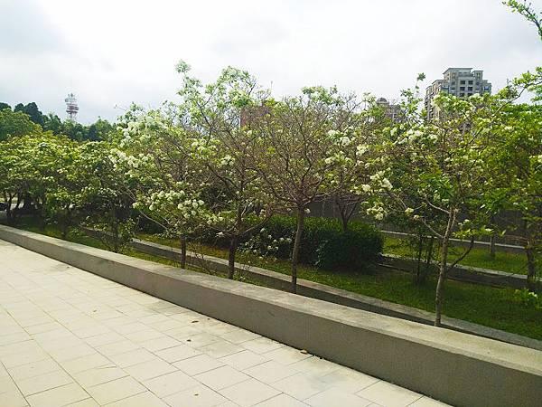 流蘇新竹市區 4.jpg